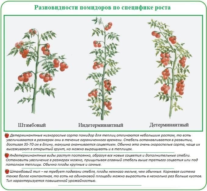 Помидор. схема помидорами